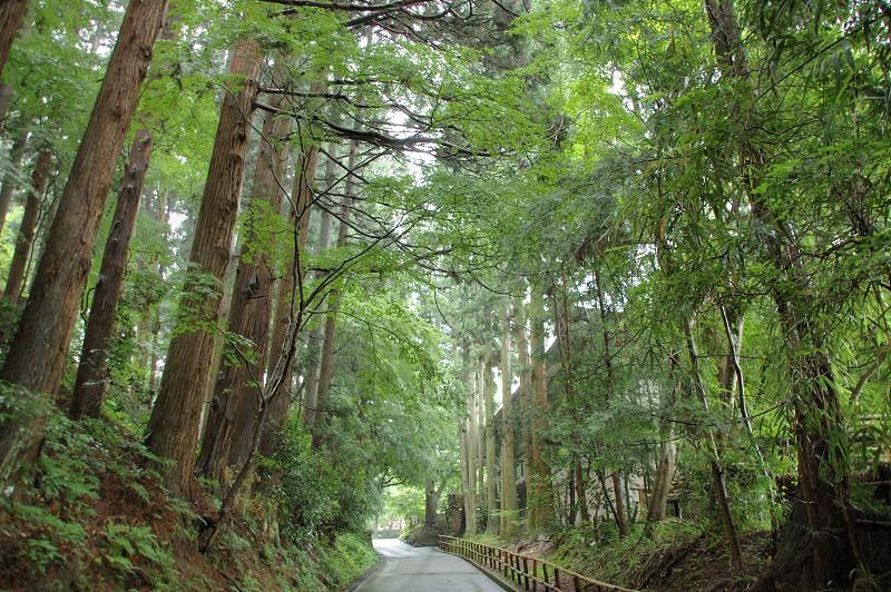平泉の林道 photo
