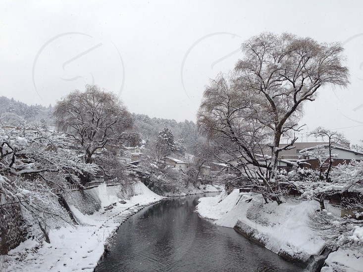 green trees with snow photo