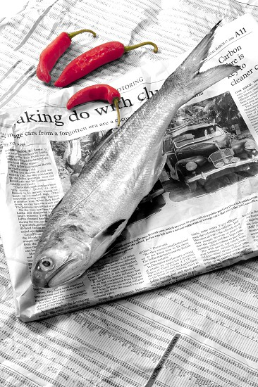 Raw fish and red chillies on newspaper. photo