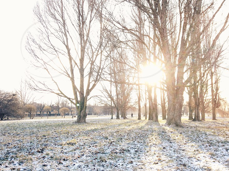 sun shining through bare trees in dusted snow covered field photo