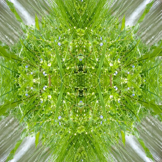 green leafed plant in kaleidoscope photography photo