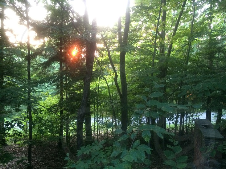 The Sun Kissing the Forest Goodnight. photo