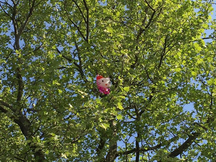 lost ballon in tree photo