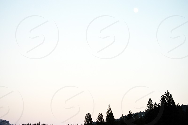 silhouette of trees under white sky during daytime photo