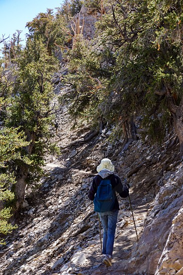 A female hiker ascends the rocky Methuselah Grove trail at high altitude in the ancient Bristlecone Pine Forest of the White Mountains of California. photo