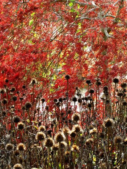 Fall foliage in Virginia photo
