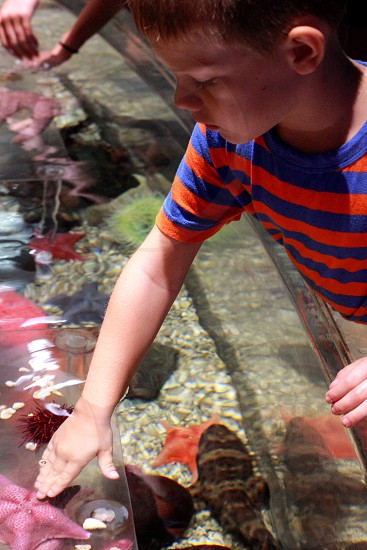 Boy star fish kid water ocean sea hand touch aquarium pet son zoo photo