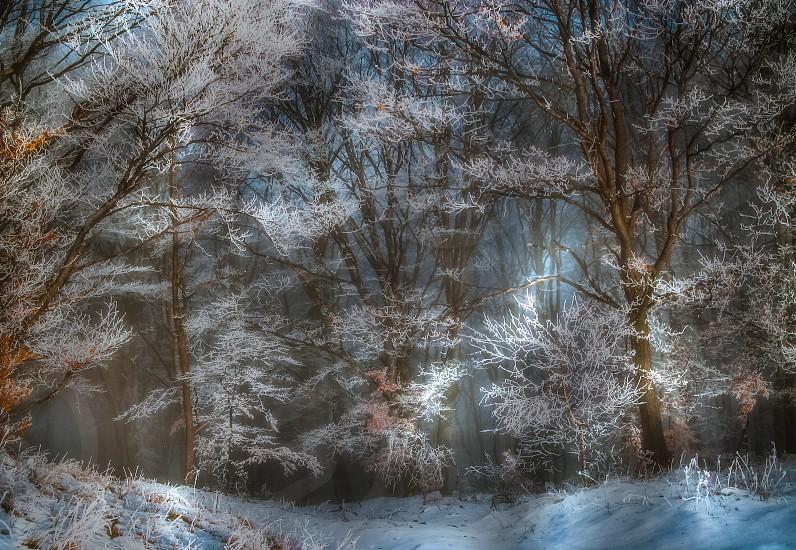 Light spots in the frozen forest - Cindrel mountains Calugarul hill Rasinari village area Sibiu county Romania 900m. photo