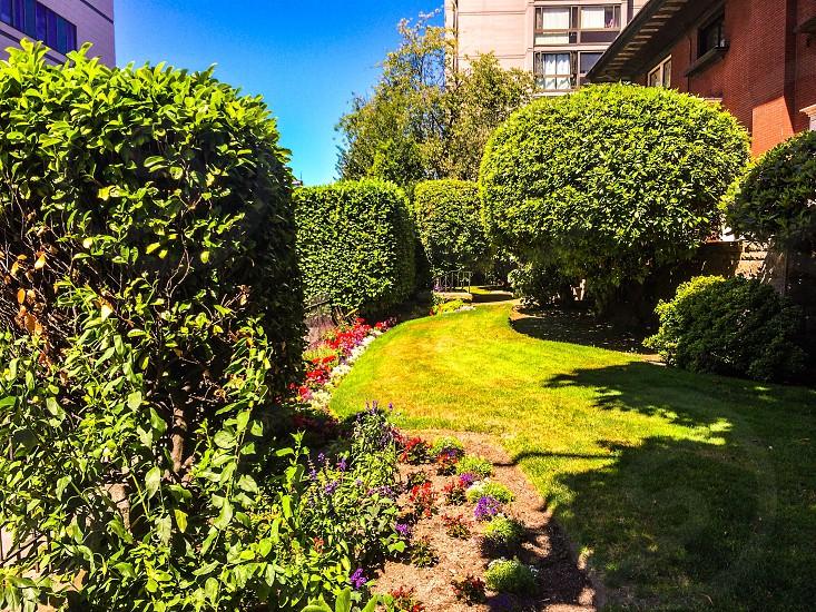 Lawn landscaping park lawn  photo