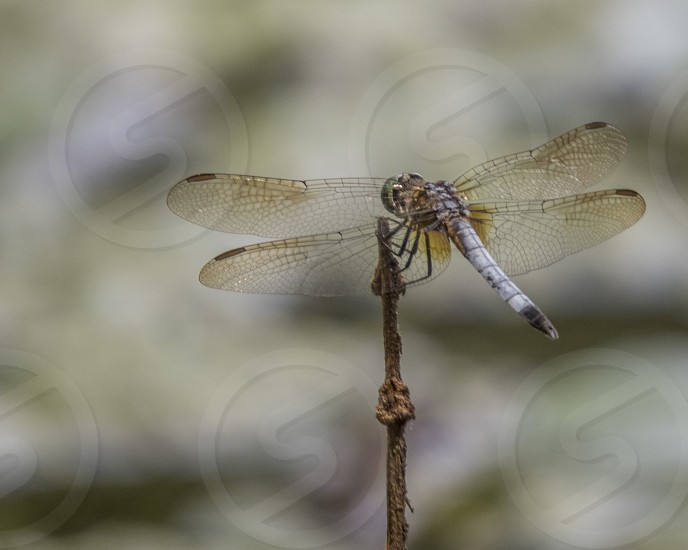 The delicate wings of a dragonfly photo