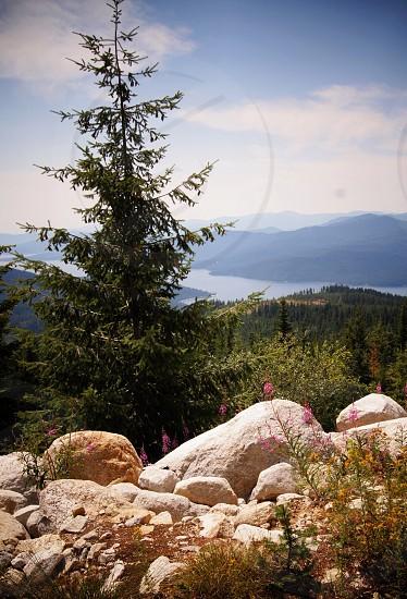 green pine tree and white stones photo