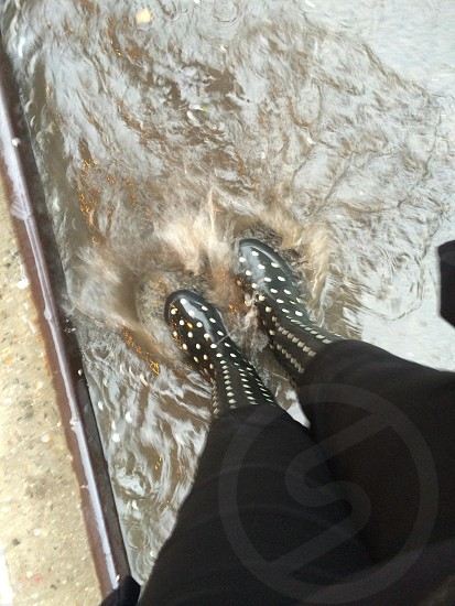 Polka dot puddle jumping in the East Village New York City photo