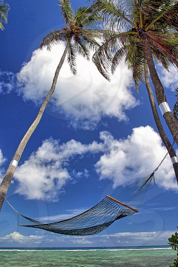 black hammock hanged on coconut trees near body of water during daylight photo