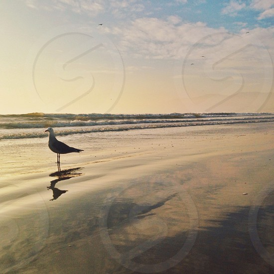 bird on seashore photo