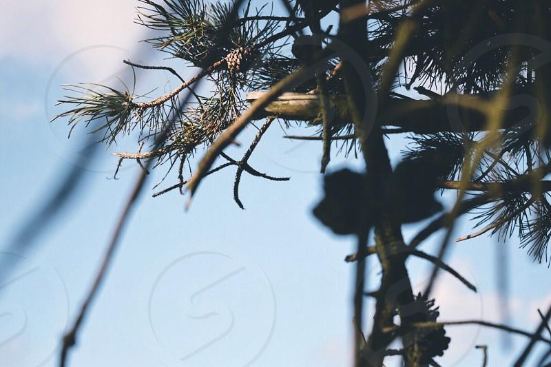 TreesoutdoorspastelsunblueSkynatureoutdoors photo