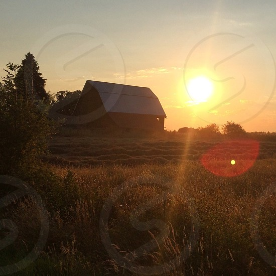 a barn house surround by grass field and some trees under cloudless sky during golden hours photo
