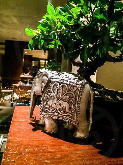 grey elephant figurine near bonsai plant photo