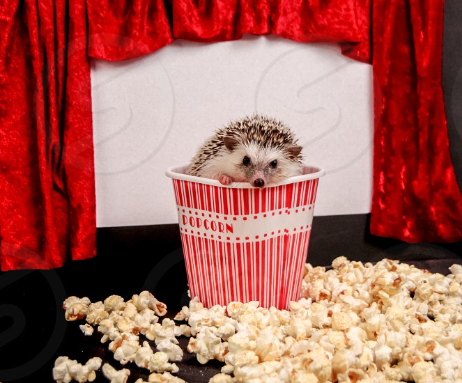 Hedgehog at the movies photo