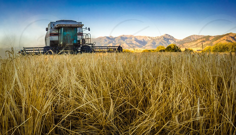 A giant combine harvester scoops up barley from a field near Bozeman Montana. The yield is destined to end up at a major beer brewer. photo