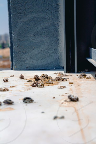 Pigeon droppings on the windowsill. Side View. photo