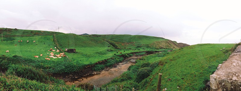 rolling green hills photo