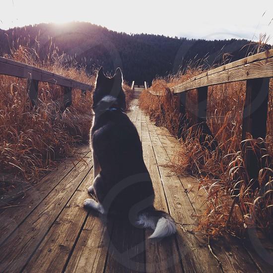 black and white medium sized dog photo