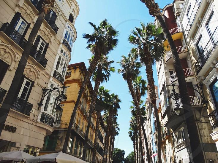 Marbella Spain #spain 🇪🇸 photo