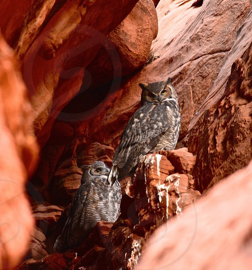 Owls Owl Canyon Page Arizona Navaho Reservation photo