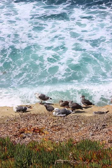 Ocean Seagulls Cliffs photo