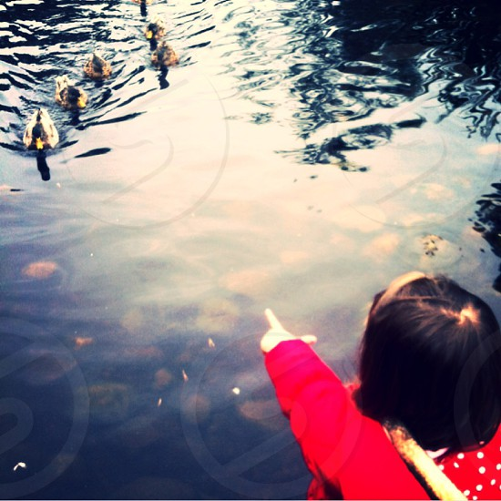 Ducks caught in the moment photo