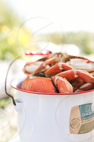 Lobster summer bbq picnic seafood photo