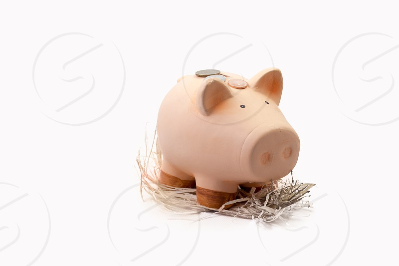 Piggy bank concept on white background photo