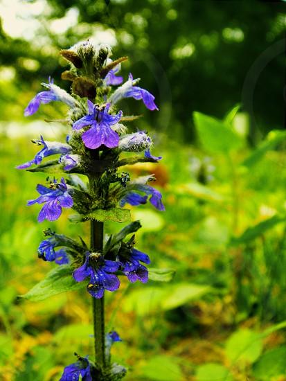 closeup photography of blue petaled flower near green grass photo