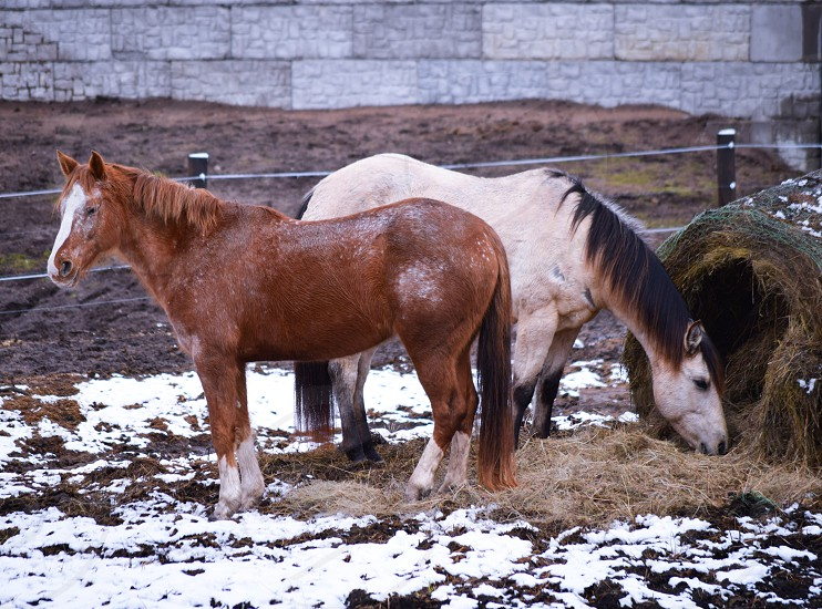 2 horses outside photo