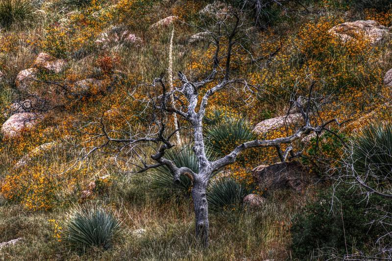 Spring Catalina Mountains Arizona photo