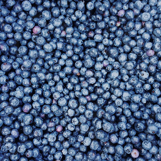 pile of blueberries photo