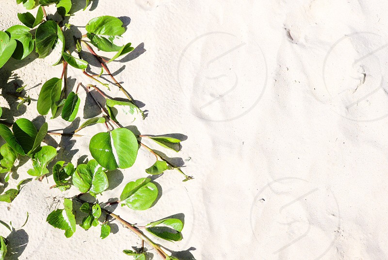 White sand beach greens photo