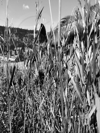 Daily Horse Rides. Loomis Washington photo