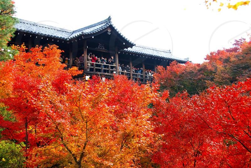 絶景かな! 東福寺(とうふくじ)は、京都市東山区本町十五丁目にある臨済宗東福寺派大本山の寺院。此処が一番の絶景場所。紅葉満開、人人の混み合いで紅葉を観覧している光景であった1枚。 photo