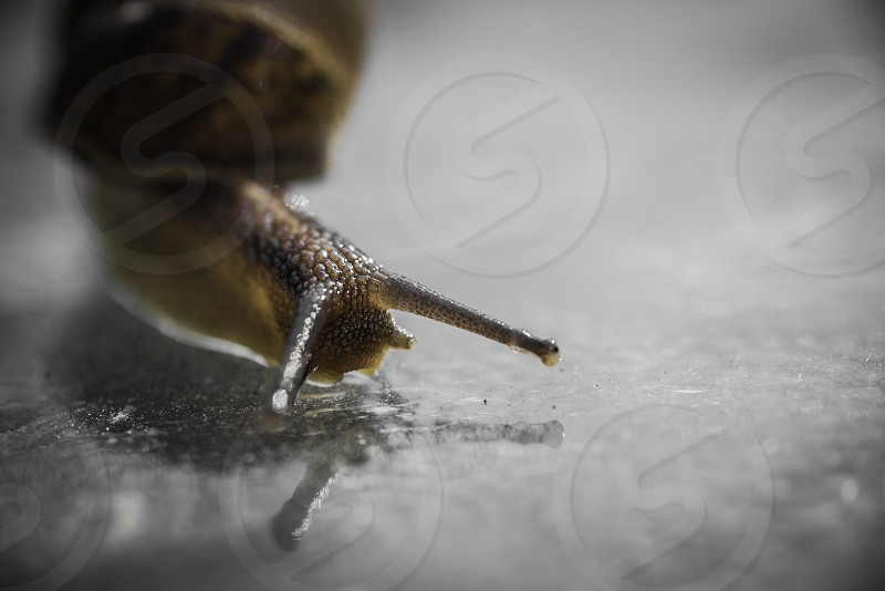 "Snail ""Creepy Crawley"" Reflection Solitary molluscan Gastropoda ""Land Snail"" Shell photo"