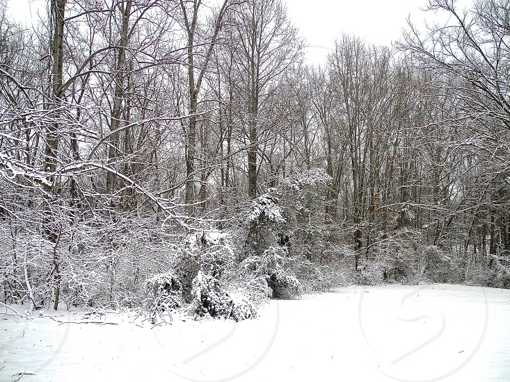 brown leaved tree covered with white snow photo