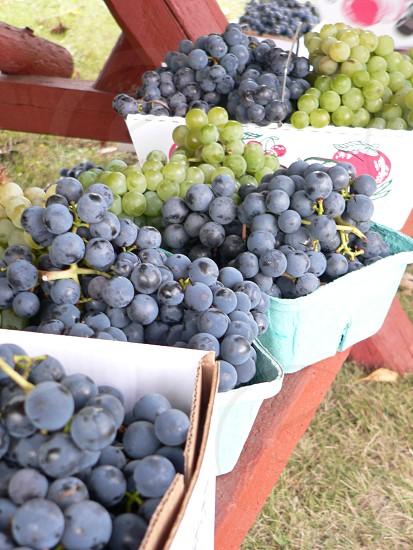 Grapes Fresh Upstate NY Vineyard photo