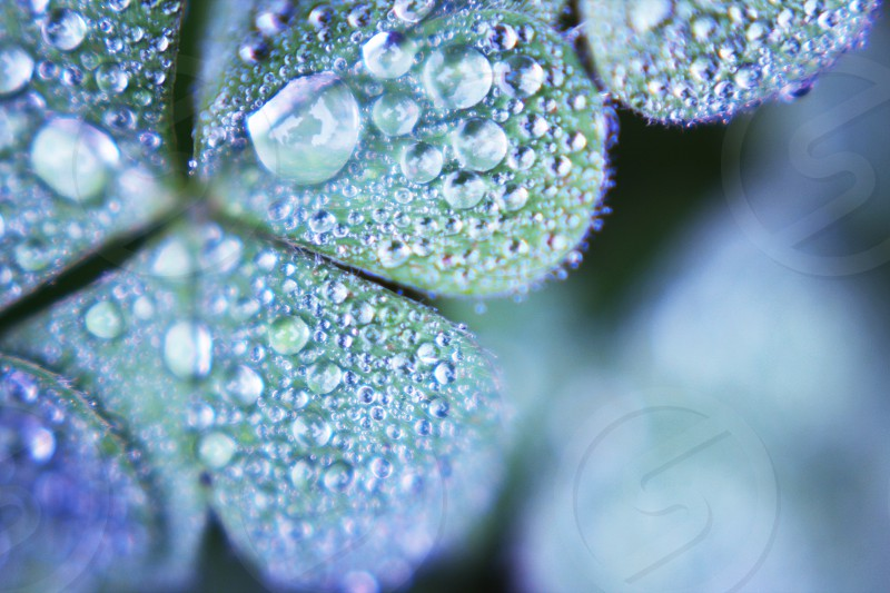 Morning dew on plant leaves photo
