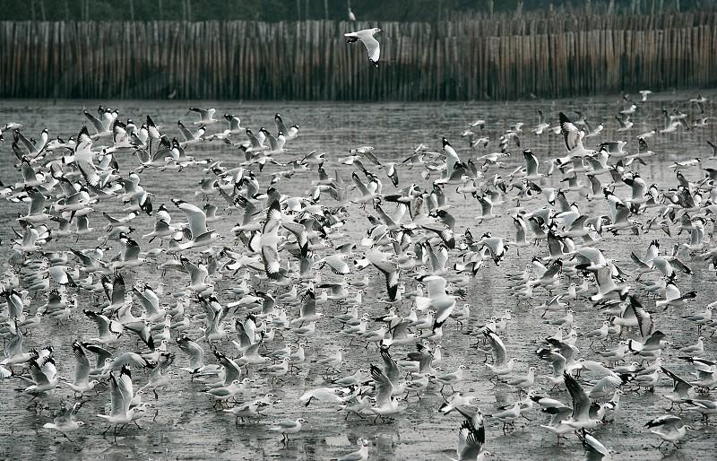 Herd of seagulls photo
