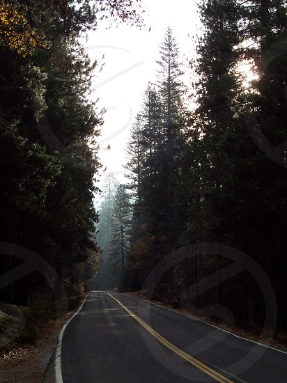 forest road view  photo