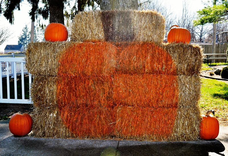 Pumpkins and hay bales photo