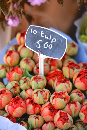 Tulips for sale in Amsterdam photo