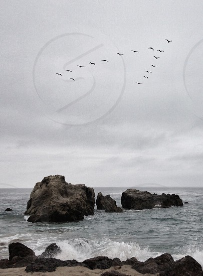 view of flying birds in v formation photo