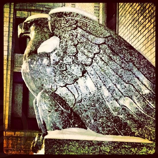 eagle America cement photo