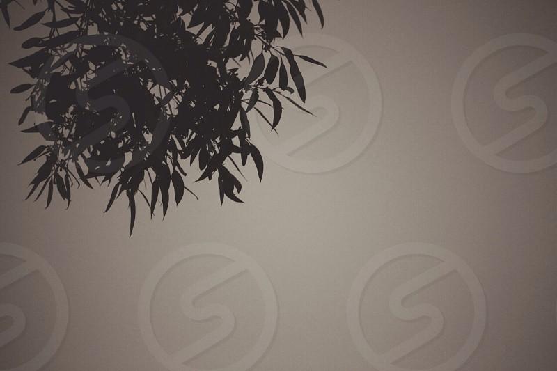 tree leaves photo